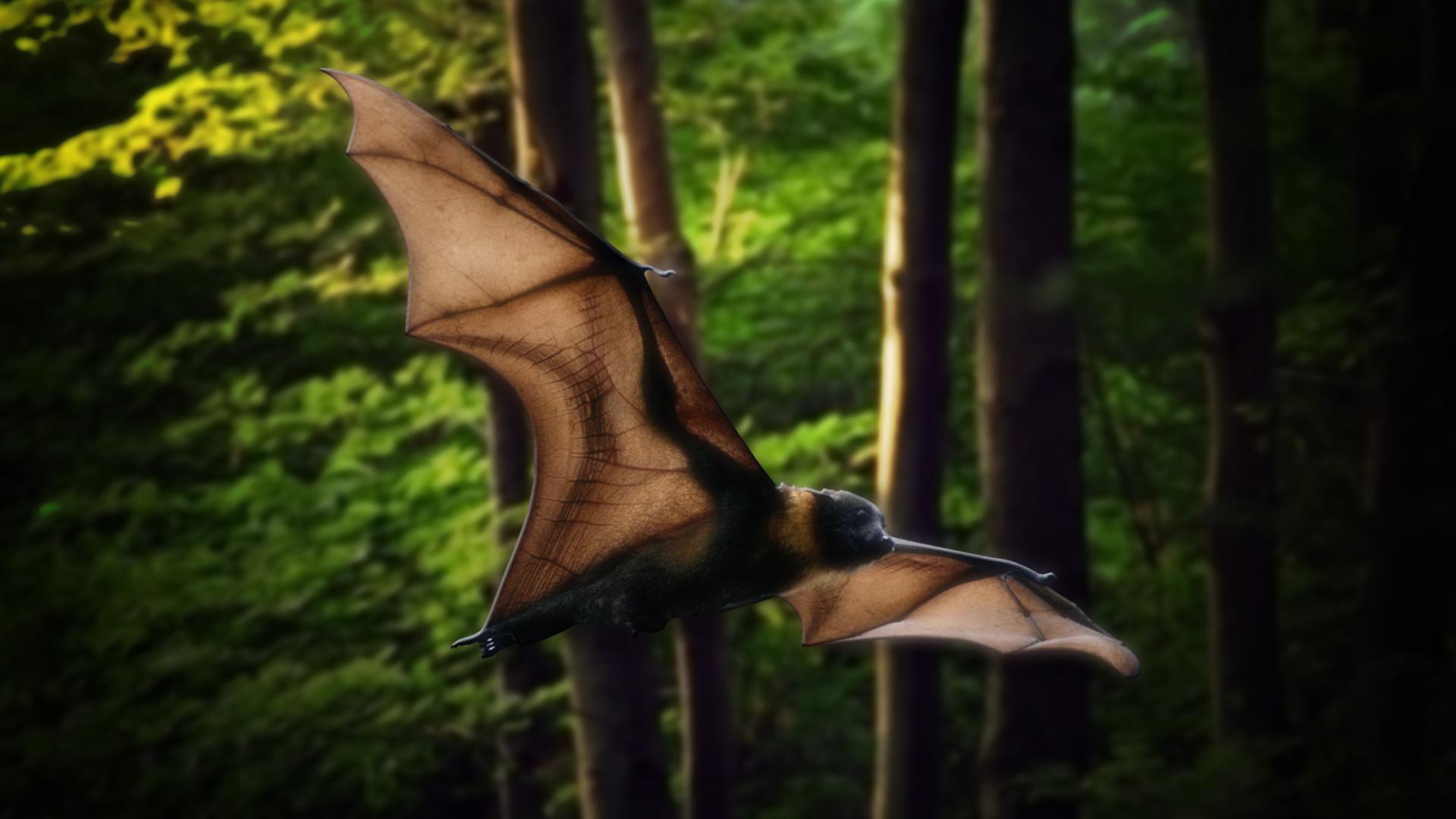 Bat_34089