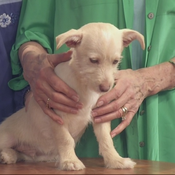 Adopt-A-Pet: February 3, 2016