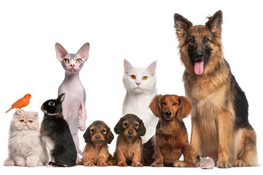 Pets2_53566