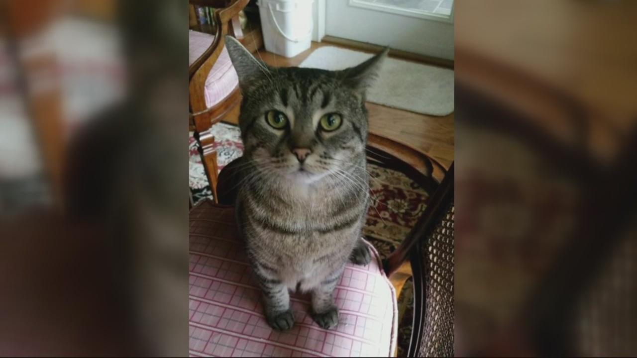 Missing Cat_141912