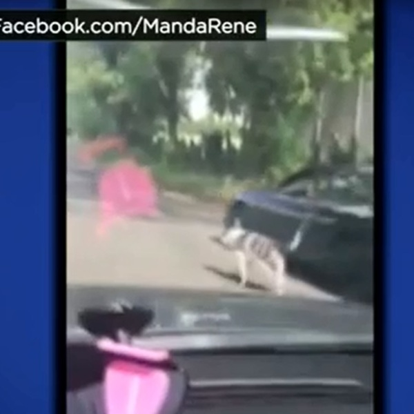 Cell phone video image of a woman walking her dog with her car in Stockton, CA_141254