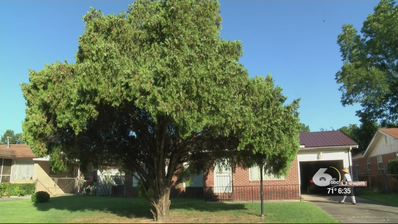 Cedar Tree Threatens Augusta Woman's Property_156822