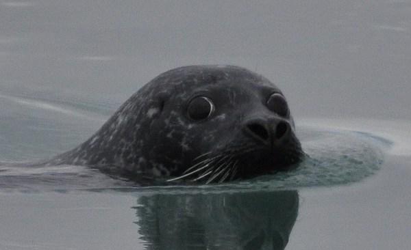 Seal_173272