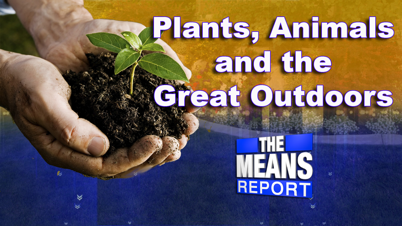 The Means Report: Plans, Animals, and the Great Outdoors