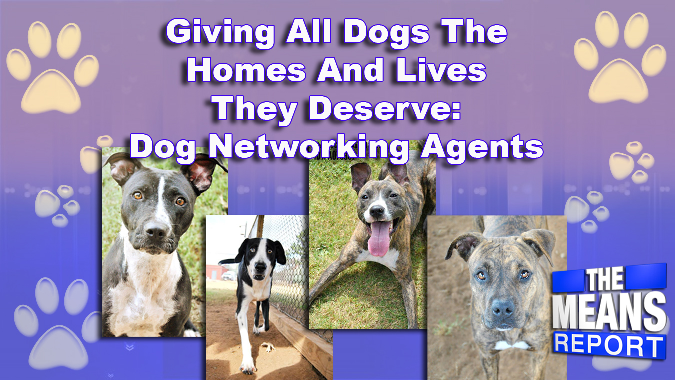 The Means Report: Giving All Dogs The Homes And Lives They Deserve