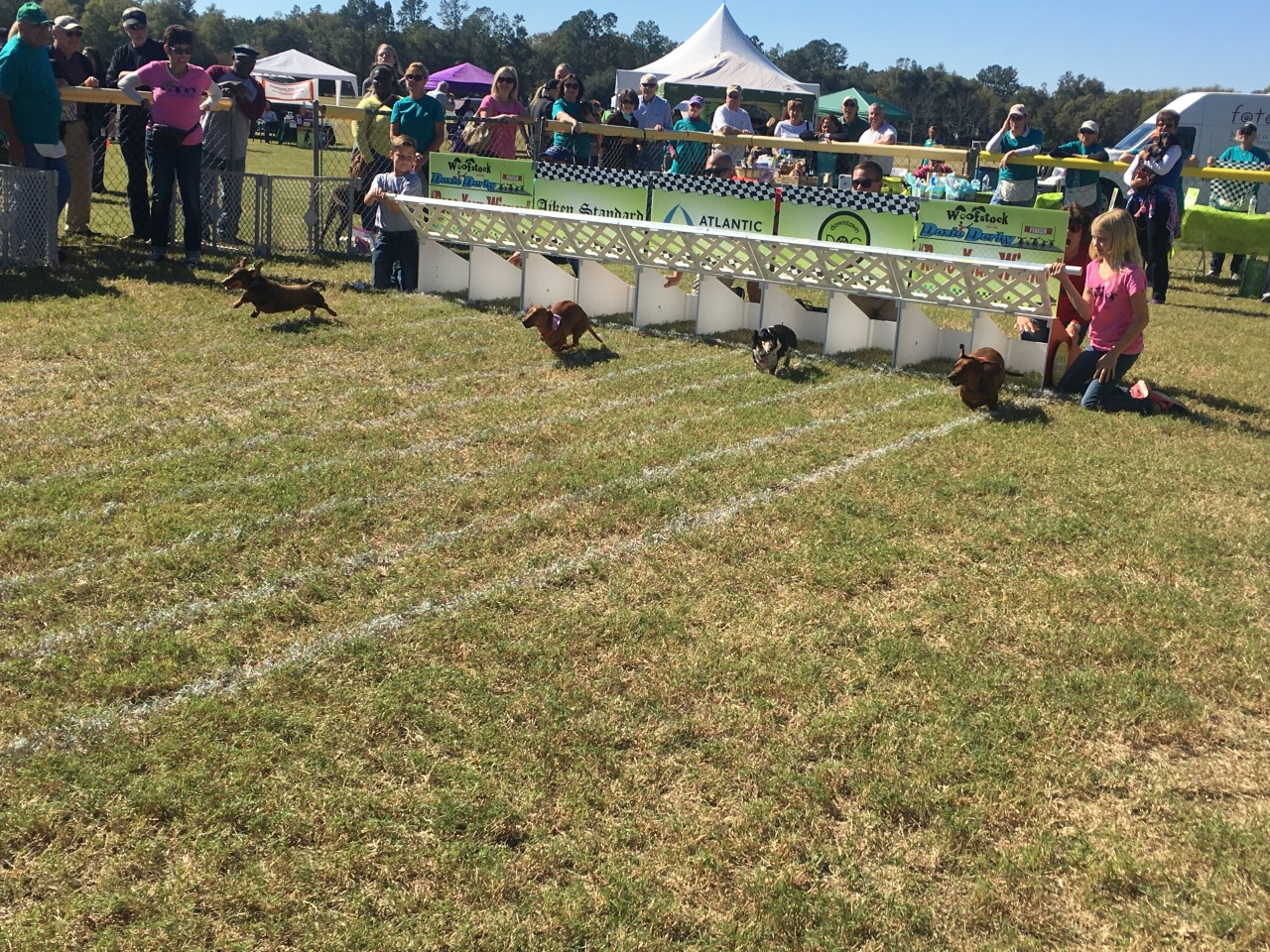 Woofstock 2016 Doxie Derby_193599