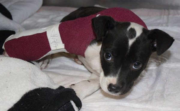 i-85pup-featured_211252