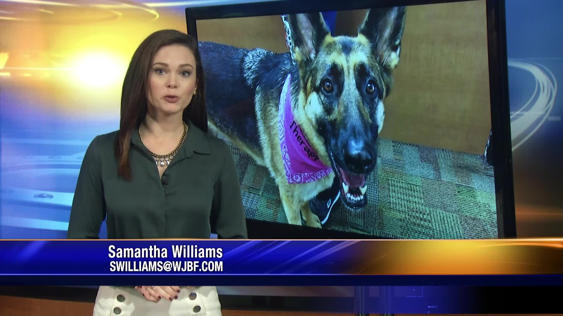 Service animal rights in businesses