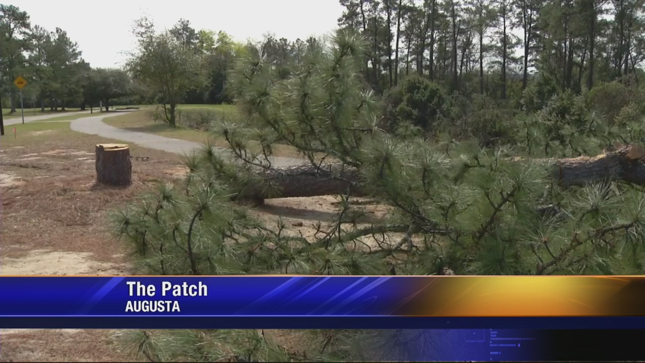 """""""The Patch"""" sees dozens of tree coming down."""