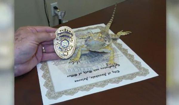 lizard_250352