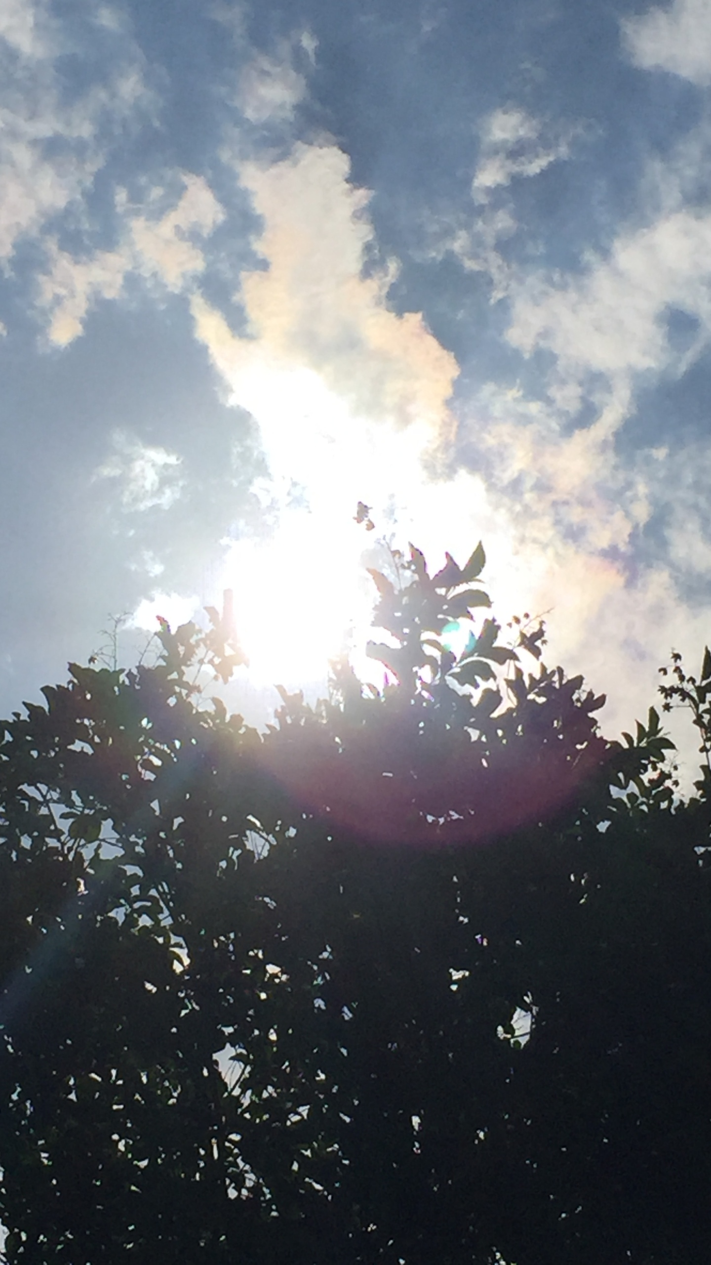 sun through the trees_251583