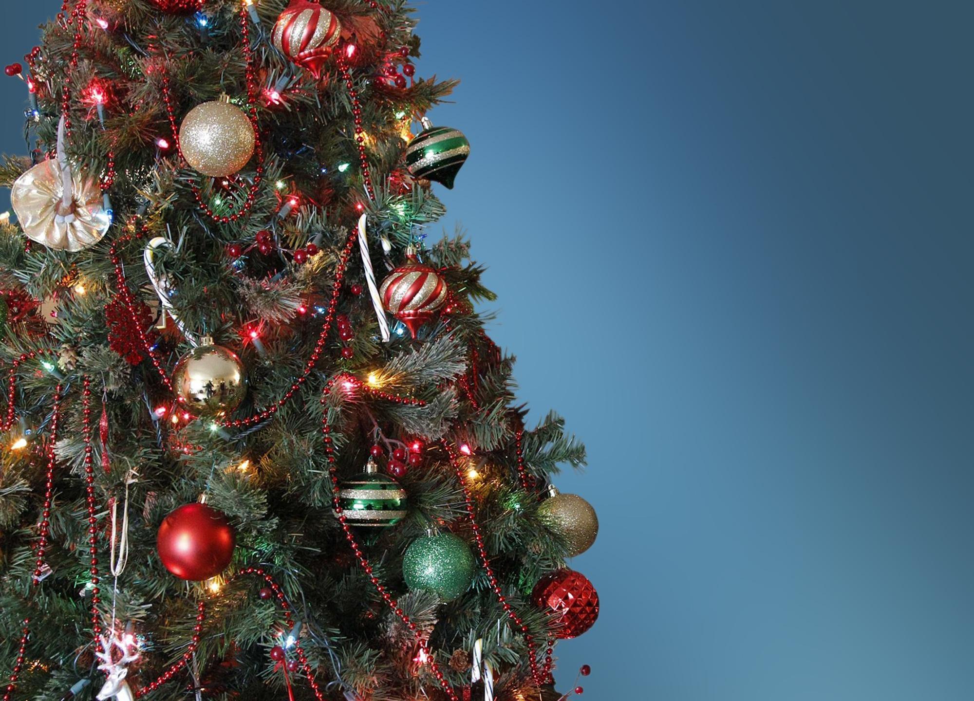 christmas tree_347400