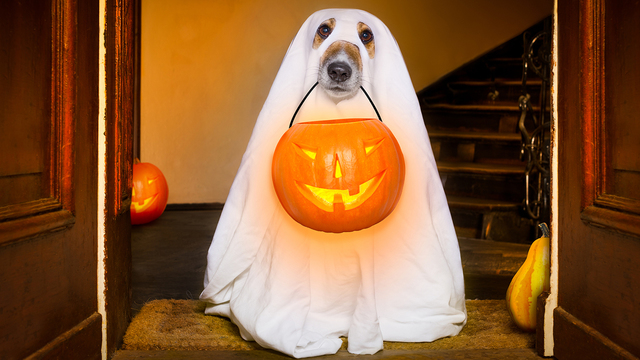 Halloween Ghost Dog Trick Or Treat_336435
