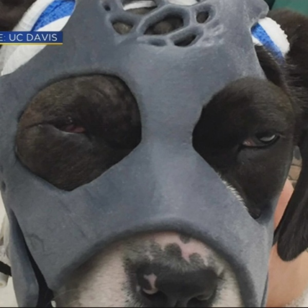 dog in mask_352348
