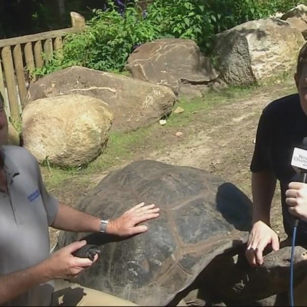 Wild Encounters: Baby Tortoises & New Enclosure