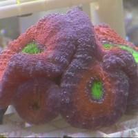 Wild Encounters: Coral