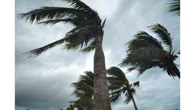 palms at hurricane_1536068542215