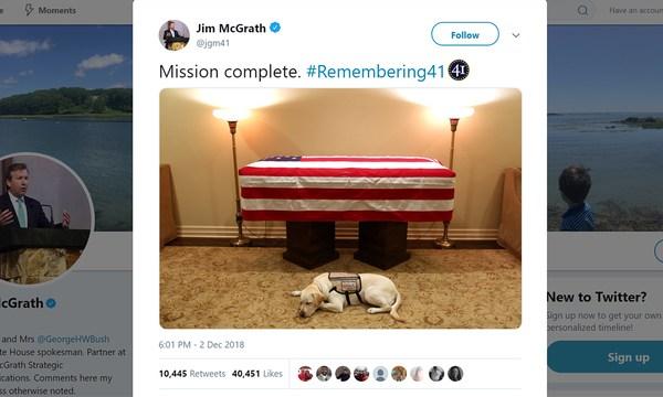 George HW Bush service dog_1543810608348.jpg_63927831_ver1.0_640_360_1543846944274.jpg.jpg
