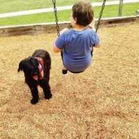 Boy with Rycon dog 2_1547114444545.jpg_67049249_ver1.0_640_360_1547483483201.jpg.jpg