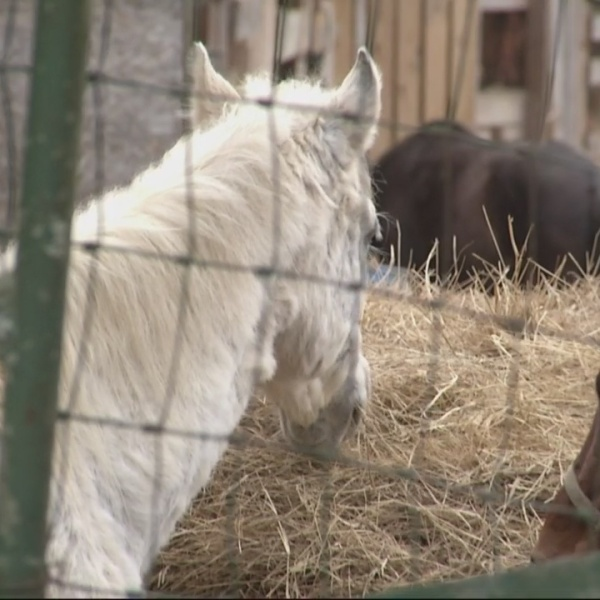 Neglected_horse_update_0_20190223031232