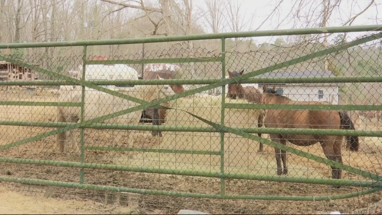 More than 40 horses reported neglected in Grovetown