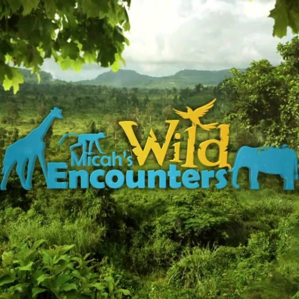Wild Encounters: Baby Lorikeets