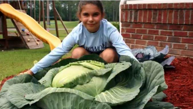 cabbage_1551404726123.JPG