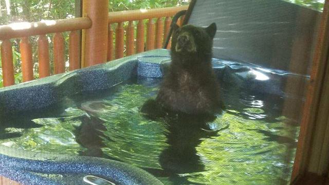 bear in hot tub 1_1556916300569.jpg.jpg