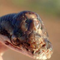 snake-1-sh-ps-190502_hpEmbed_3x2_992_1556889730595.jpg