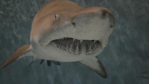 Sharks10_38405